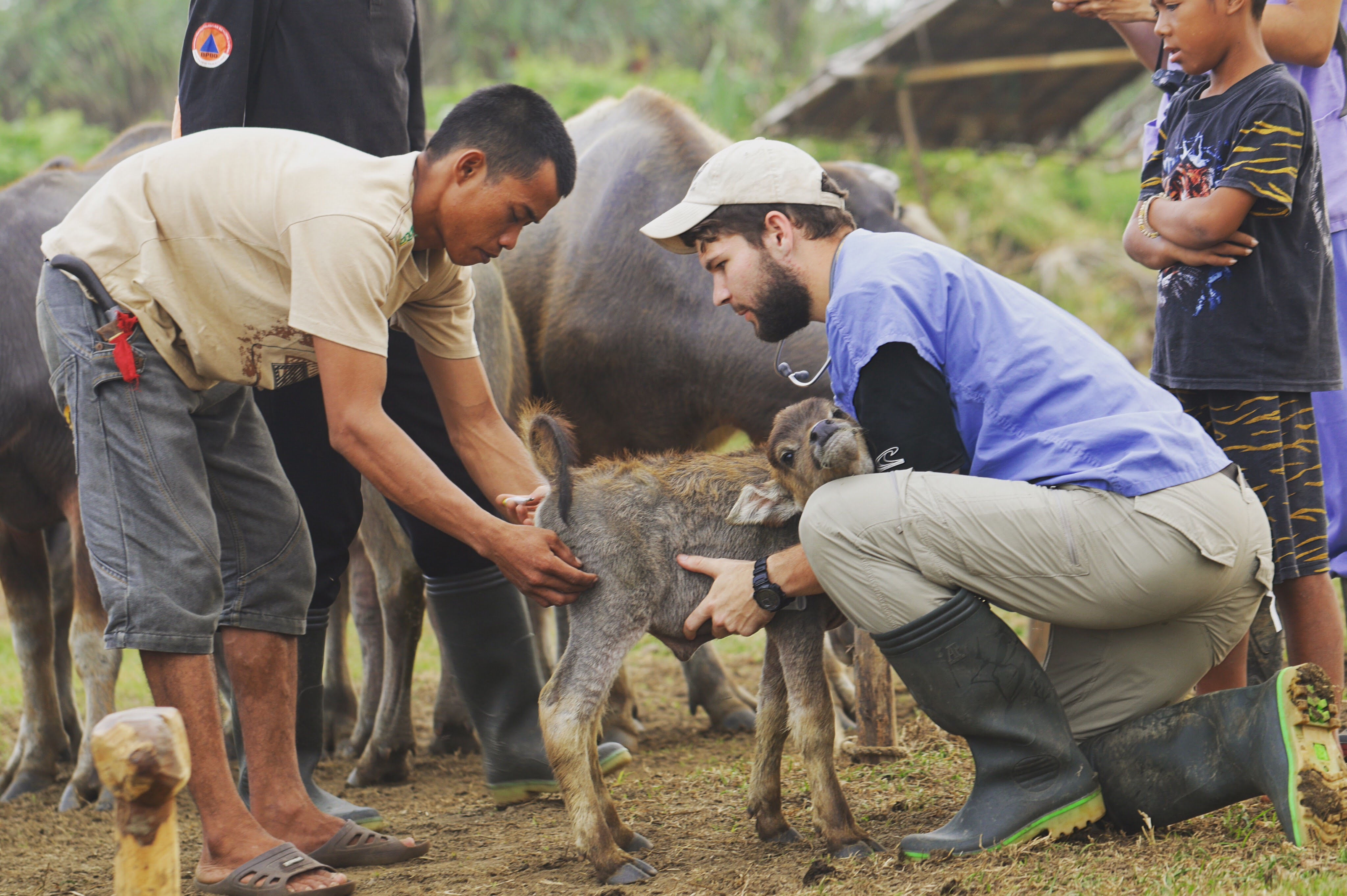 Veterinary student with livestock and local community
