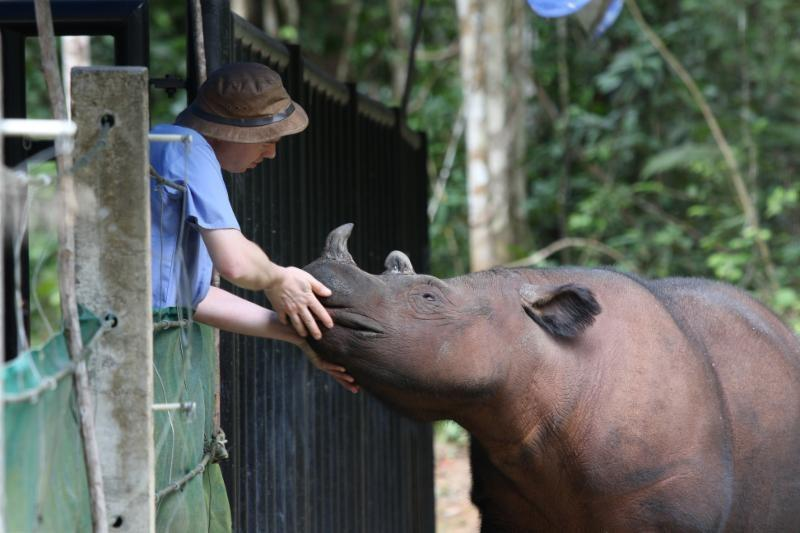 Robin with a rhino