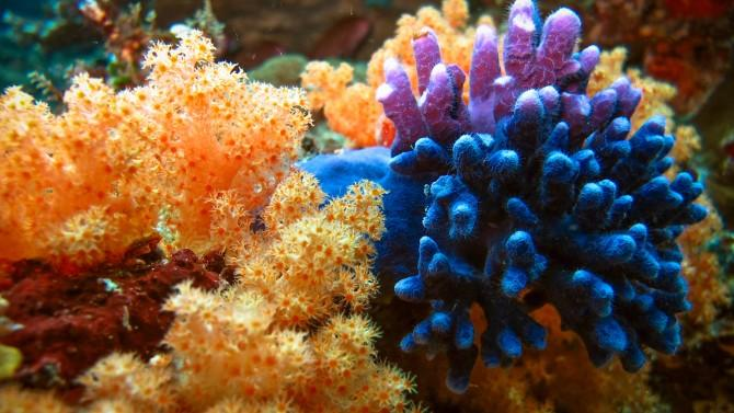 A beautiful underwater image of colorful, healthy coral